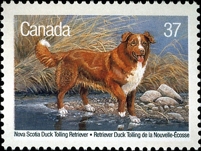 Canadian Hunting Dog Breeds